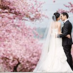 spring time vancouver wedding photo of bride and groom standing in front of cherry blossoms www.lucida-photography.com